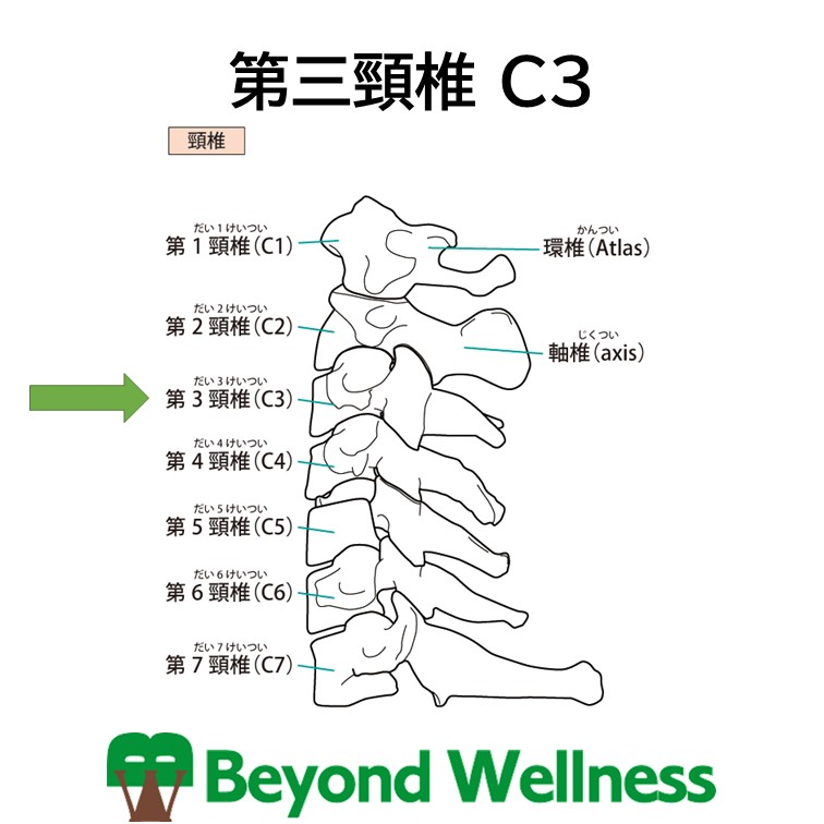 第三頸椎 C3
